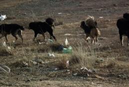 С.Аригуун: Эзэнтэй бүх нохойны үржлийг хязгаарлана www.ikon.mn