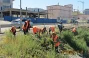 Шарилжгүй Улаанбаатар аяны хүрээнд нийт 228  га талбайн зэрлэг ургамлыг устгалаа