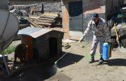 Чингэлтэй, Сүхбаатар дүүргийн гэр хорооллын айл өрхийн нохойг бүртгэлжүүлэх, үржил хязгаарлах ажил хийгдэж байна